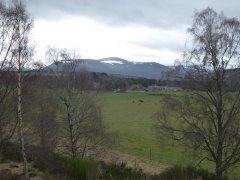 19-Return-via-Dell-Farm-on-An-Camus-Mor-Walk-050414.JPG