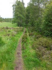 22-Badenoch-Way-at-Insh-270615.jpg